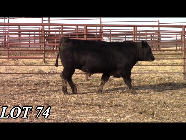 Mead Angus Farms Lot 74