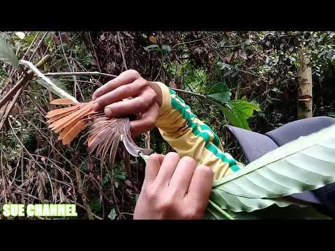 pikat burung sikatan bakung liar di dalam hutan mantap