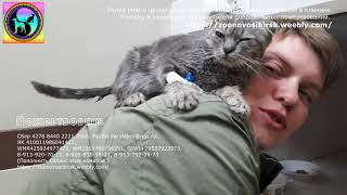 Жертва разведения Почему не стоит покупать вислоухих без документов kind kitten is waiting for help