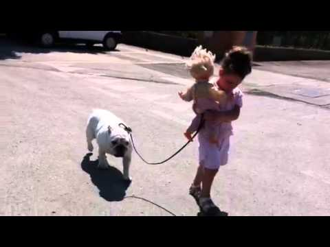 Mikantribe Bulldog