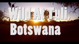 Wild At Tuli, Botswana Video