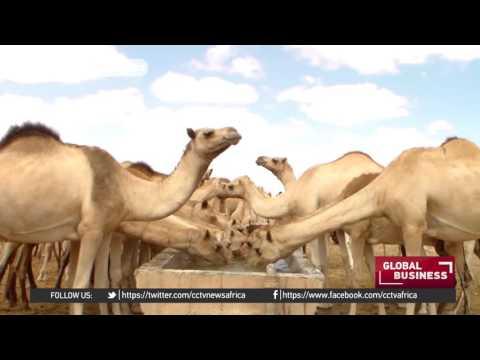 Somalia to begin exporting livestock to Malaysia