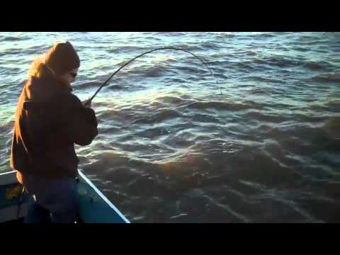 2 how to catch sturgeon san pablo san francisco bay 1 4 for Sf bay fishing report