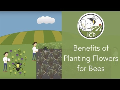 Benefits of Planting Flowers for Bees