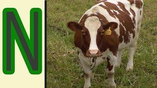 видео Азотные удобрения - виды и свойства
