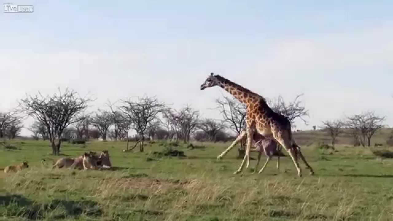 Películas porno gratis de mamas co burros Videos Gratis De Senoras Que Follan Con Animales