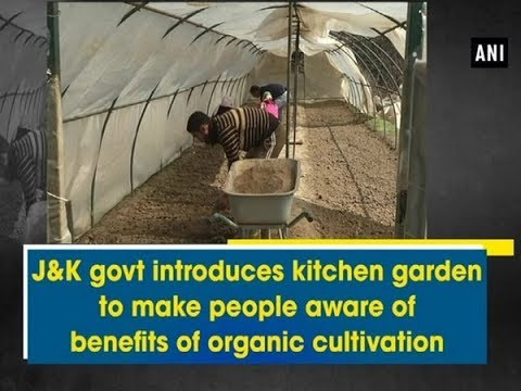 J&K govt introduces kitchen garden to make people aware of benefits of organic cultivation