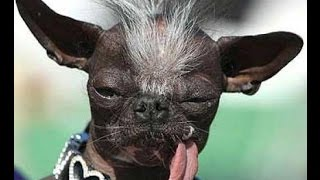 BEST FUNNY DOGS COMPILATION 2015 - 10 Minutes of Best Dog and Puppy Fails!  #4