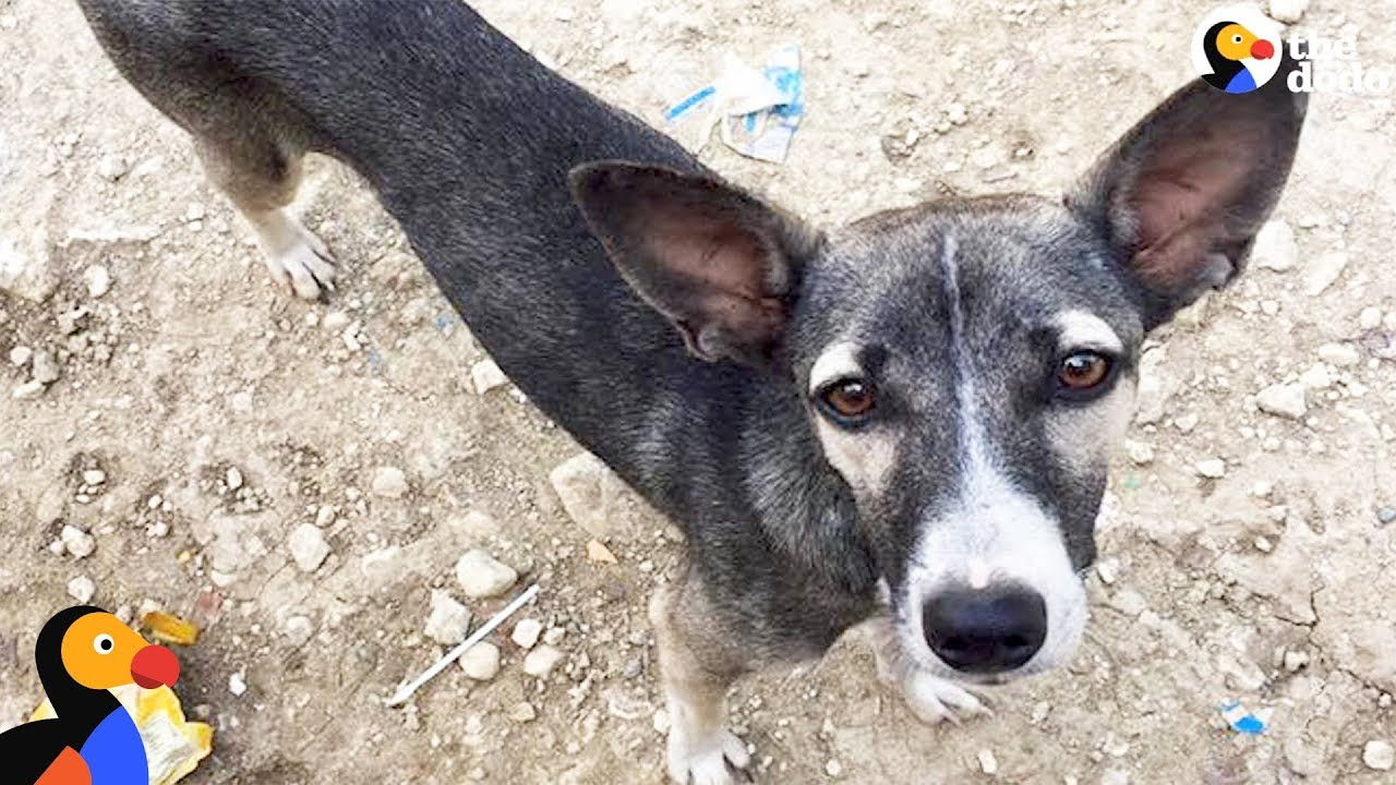 Pikachu the Stray Dog Follows Traveler Who Helps Find Her A Forever Home | The Dodo