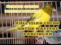 Kenari Gacor Materi Mewah Full Isian  Mp3 - Mp4 Download