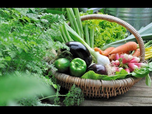 L'alimentation biologique: de quoi parle-t-on ?