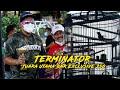 Bnr Exclusive g Murai Batu Terminator Sien Ronny Juara Utama Kelas g  Mp3 - Mp4 Download