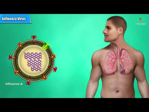 Influenza Virus Microbiology Animation