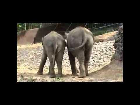 สารคดีช้างไทย2549