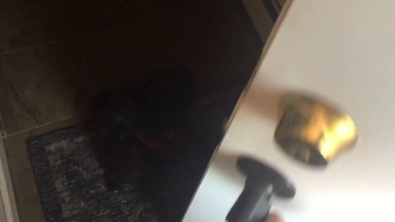 Clyde The Shihpoo Hates It When You Close The Front Door On Him