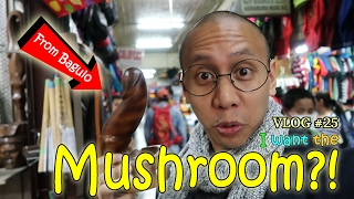 Video MUSHROOM?!   February 12, 2017   Vlog #25 download MP3, 3GP, MP4, WEBM, AVI, FLV Maret 2018