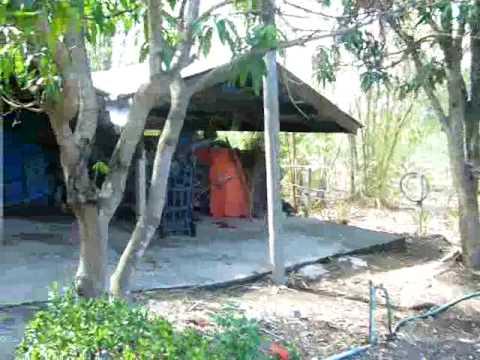 Ying & Bee Garden 1