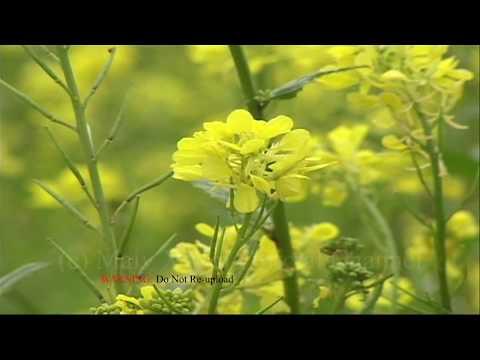 Instrumental Karaoke - Nco Ntuj Tshiab Tawm Ntuj Tsaug by Maiv Xyooj (Original Music Video)