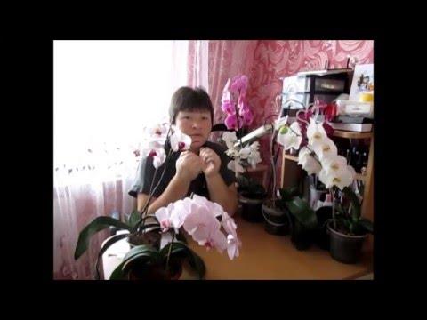 Мошкара в орхидеях  .Что делать в таком случае.