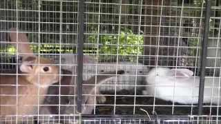 Raising Meat Rabbits And Our Rabbit Hutch