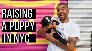 NYC Vlog: Raising a puppy in the city! (Summer 2019)