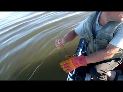 Ловля сома на квок 109 кг, длинна 2 м. 60 см. База Золотые Барханы 2015