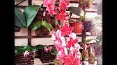 Мастер - класс по изготовлению бамбуковой корзинки для орхидей и .