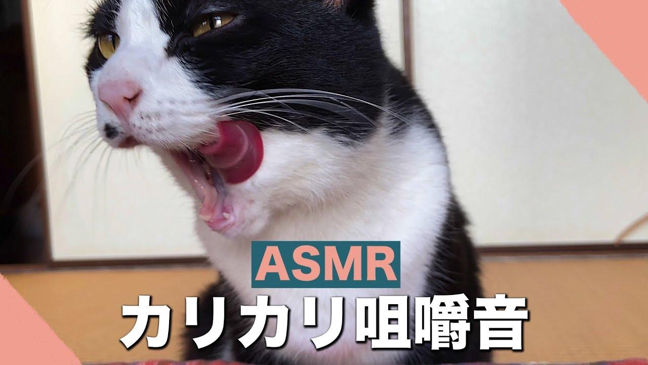 🍙👅ASMR いつものカリカリを仕方なく食べる猫【咀嚼音】#178