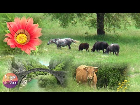 5 hrs summer scenery with nature sounds # Sound of cicadas, birds, crickets & river # 1080p video