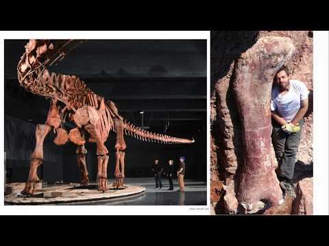 Sauropods: Titans Of The Mesozoic