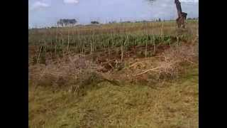 Video of a stream crossing a farm in Thome area of Laikipia near Rumuruti
