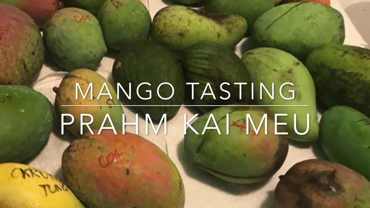 Florida Mango Tasting - Brahm Kai Meu Thai Mango