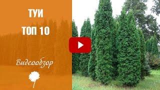 видео Садовый магазин - купить для огорода и сада в Нальчике
