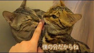 猫たち2匹について気になることが・・・ thumbnail