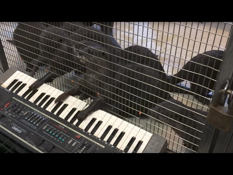 Zoo gives animals musical instruments