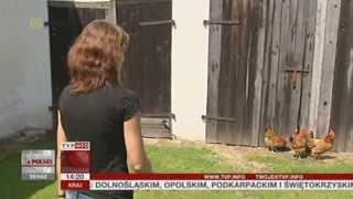 Kura została... kogutem... ale jaja (Raport z Polski TVP Info, 19.06.2013)