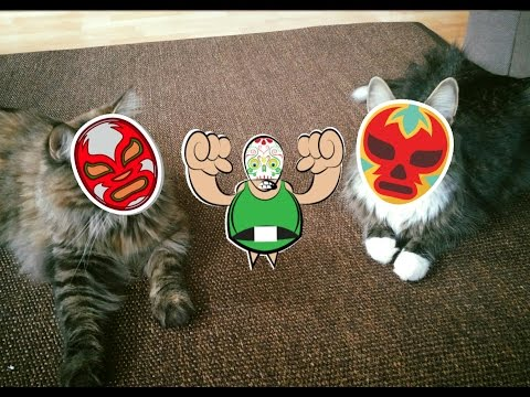 Maine Coon vs. Norwegian Forest Cat Cat Wrestling