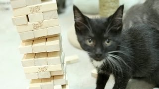 Kitty learns how to play Jenga, plays DIRTY.