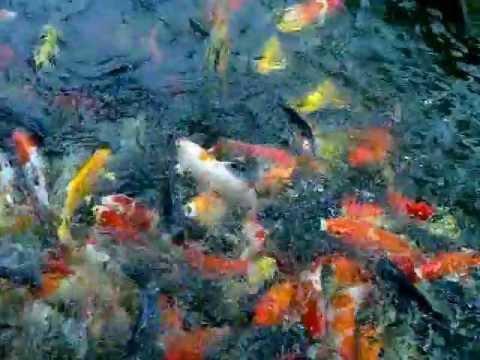 Vissen voeren Erawan museum.