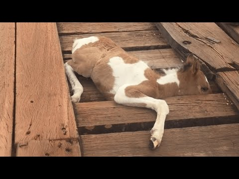 Man Rescues Young Horse from Bridge