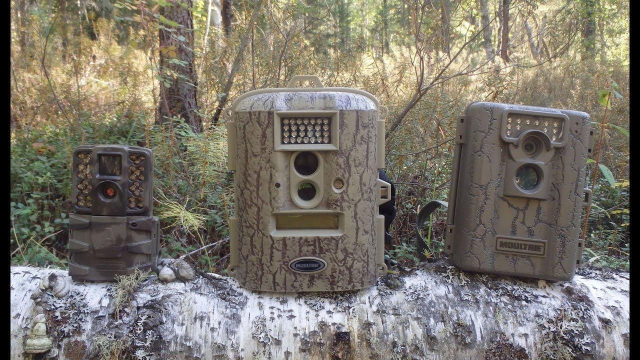 день рождения как вычислить фотоловушку в лесу вспоминаете мечтаете, деды