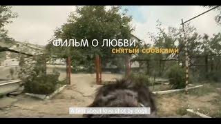 Фильм о любви, снятый собаками  A film about love, shot by dogs