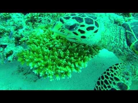 GoPro Hero 3 Test @ Coral Garden Dive Spot - North Male Atoll, Maldives