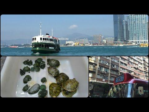 Hong Kong Vlog / Day 5 / Trams,Boats & Live Animal Markets