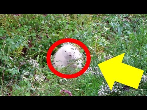 Strange Creature Found In New Hampshire Is Like Something Out Of A Fairy Tale