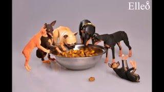БЖД собаки