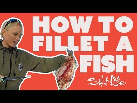 How to Fillet A Fish | Salt Life