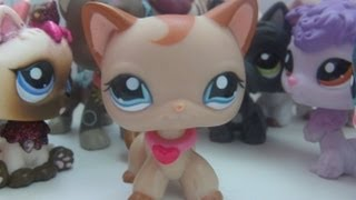 LPS:Beyond Perfect #7(Popularity)