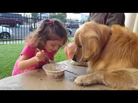 Oshie's Quest For Mac & Cheese Glory | Golden Retriever VLOG