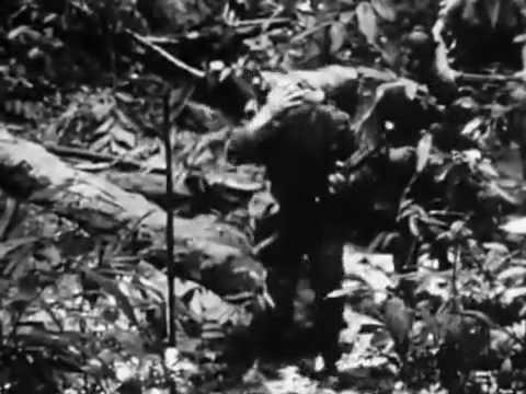 Jungle Green_ Borneo (1964).flv